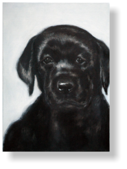 LABARDOR PUP 6 weeks old,  50 : 70 cm acrylic paint, mixed media, canvas